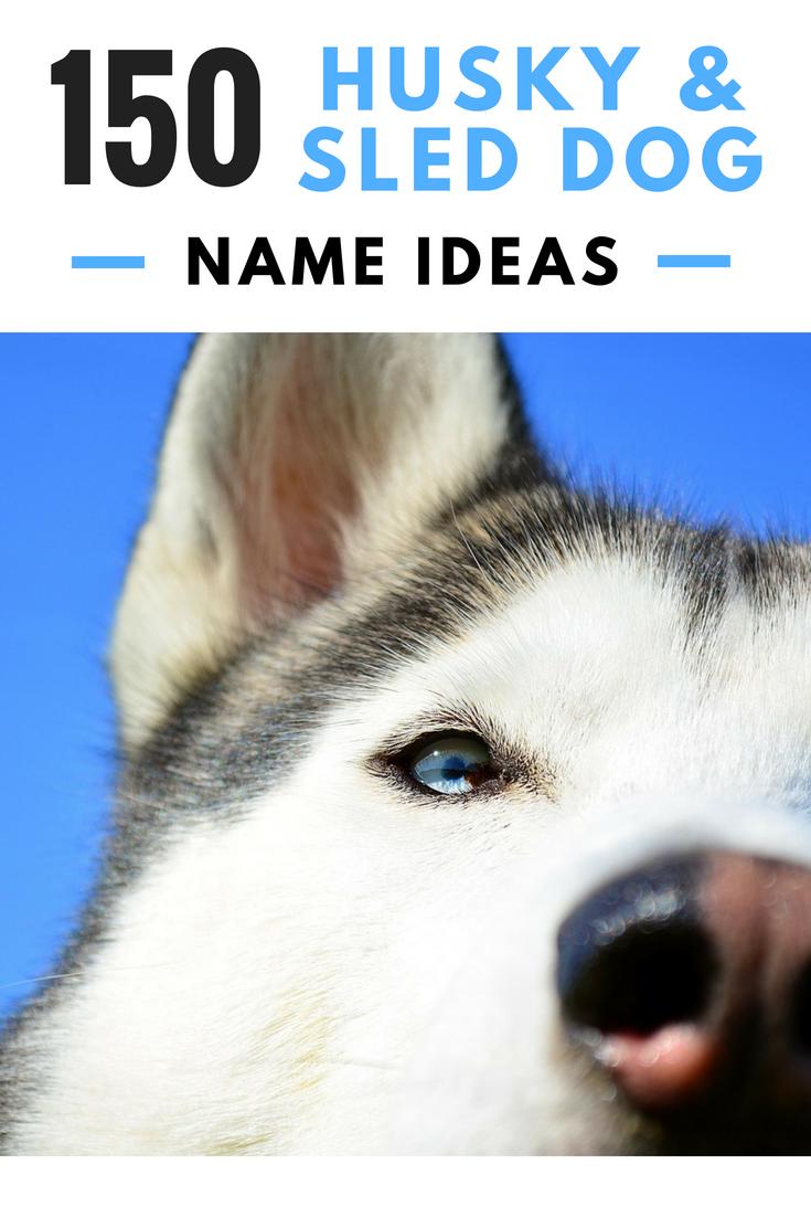 150 Cool Husky Names And Sled Dog Name Ideas Dog Names Husky Names Best Dog Names
