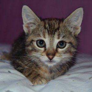 Epingle Sur All Kittens