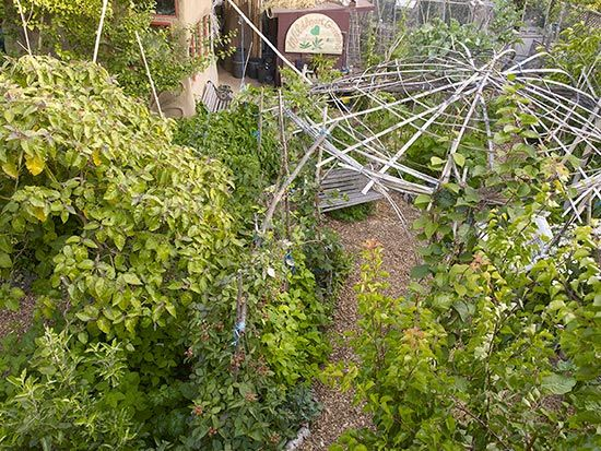Fruit trees form the main canopy layer in the food forest. In the center of & Fruit trees form the main canopy layer in the food forest. In the ...