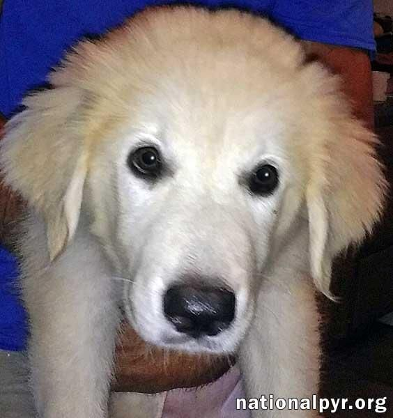 Adopt Abby In Ny Pup Adopted On