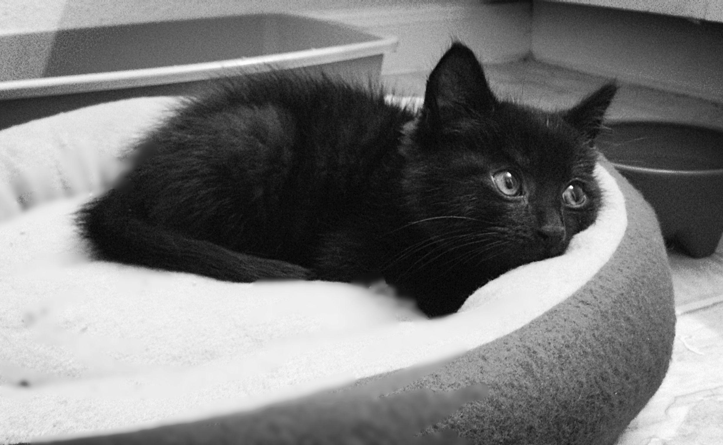 ~Black Kitten~ #HisNameIsAsh #Blackcats @catwisdom101