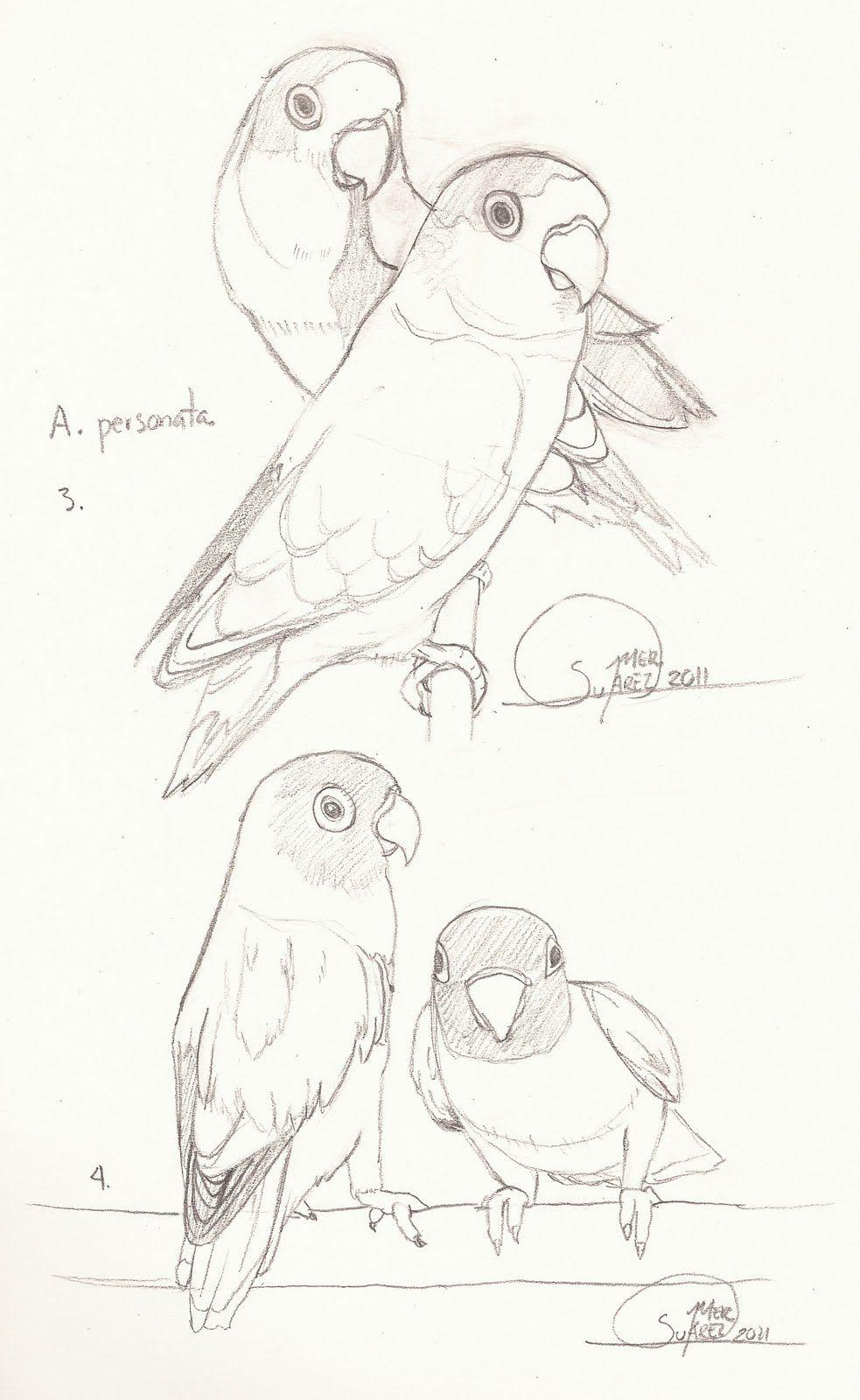 Dibujos De Agapornis Buscar Con Google Boceto De Aves Dibujos De Pajaro Bocetos De Animales