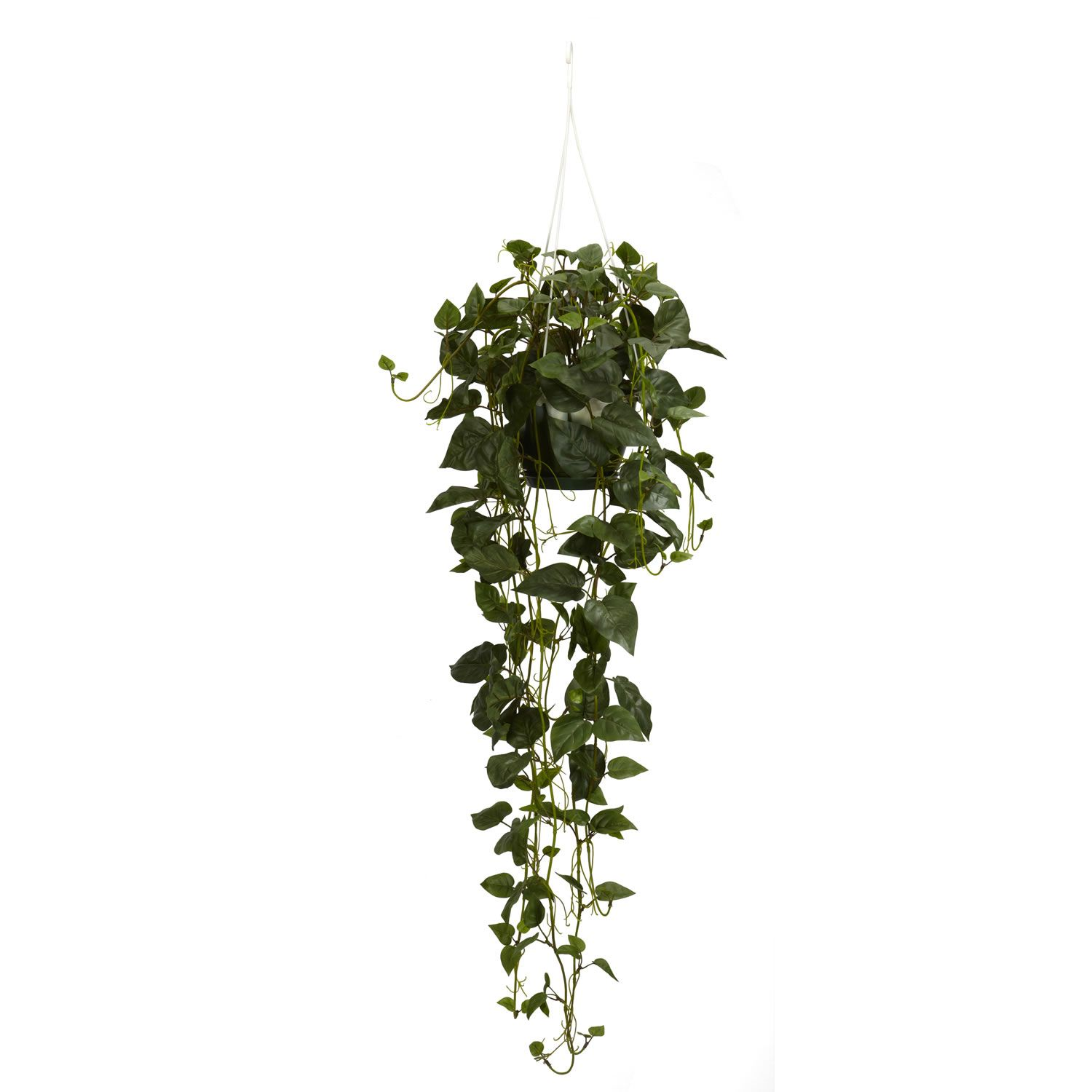 plante retombante | Home > Philodendron Hanging Basket ...