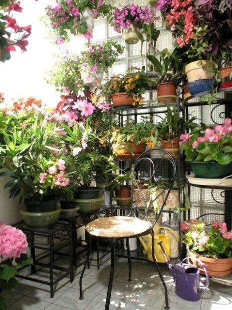 Balkon W Kwiatach Plants