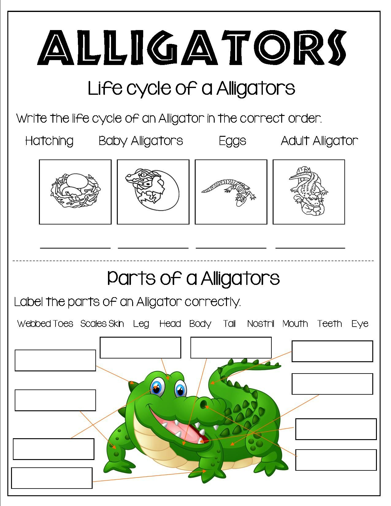 hight resolution of All About Alligators   Life cycles kindergarten