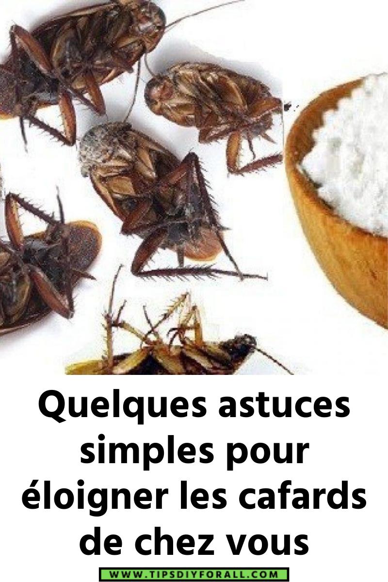 Quelques astuces simples pour éloigner les cafards de chez vous