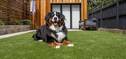 Artificial Grass For Dogs | Cats | Household Pets | Lawn Care With Dogs | Great Grass