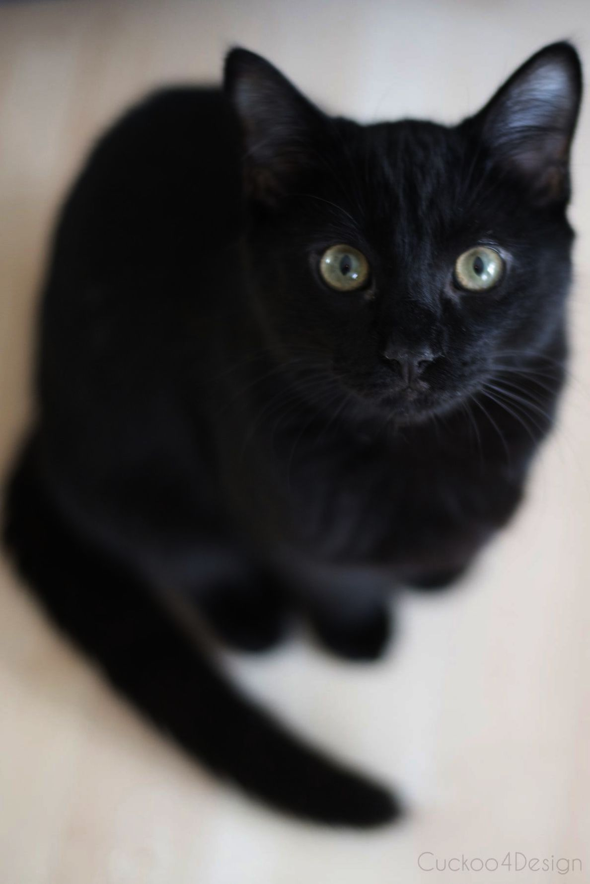 Cute Cat Names Pinterest Rather Cute Cat Girl Pictures Such Cute Animals In Africa Lot Cute Kittens Names For Male Neither Cute Cat Cats Cute Animals Cute Cats