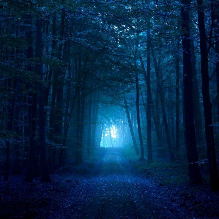 Acho lindo essas trilhas