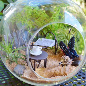 Hedgehog On A Leaf Terrarium Kit Large Glass Terrarium 2 Tillandsia Air Plants Sand And