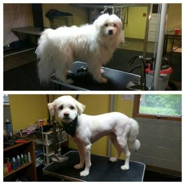 Monica Davila Is Among The Best Dog Grooming Professionals Who