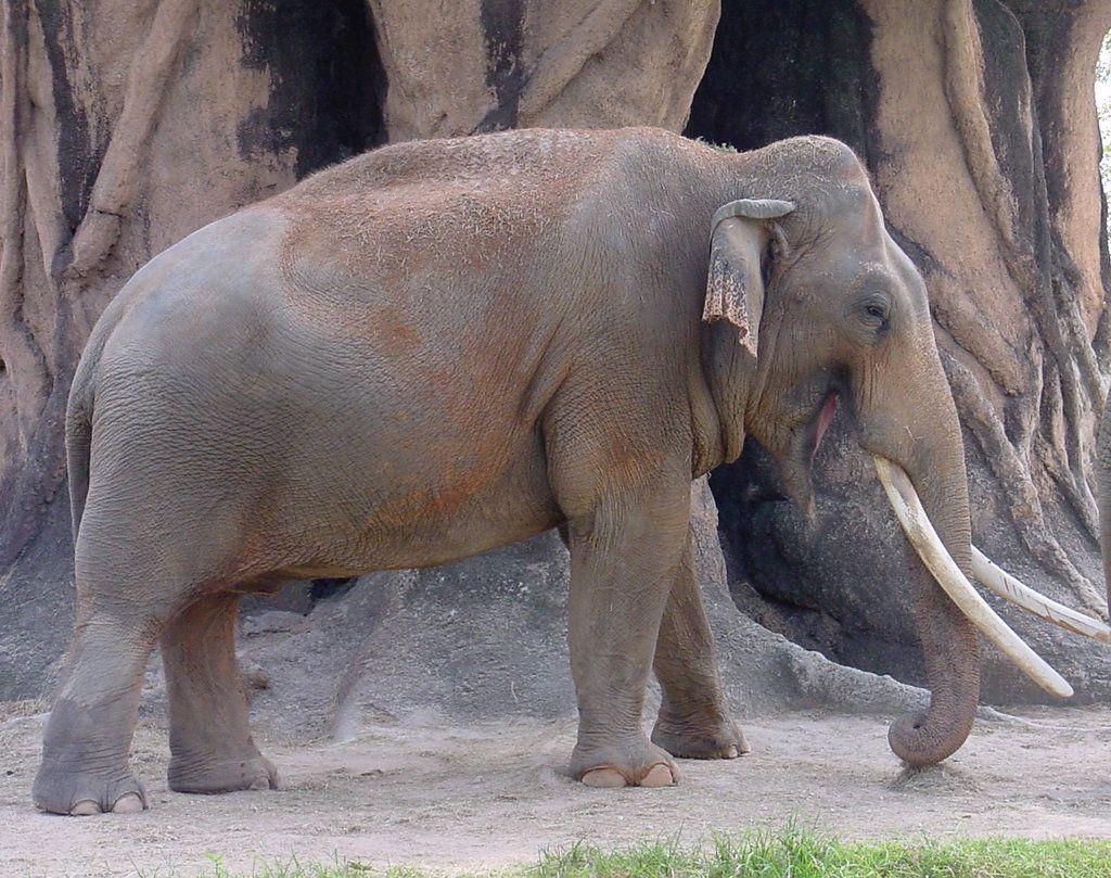 Elephant Animal Stock Photo by Enchantedgal-Stock.deviantart.com on @deviantART