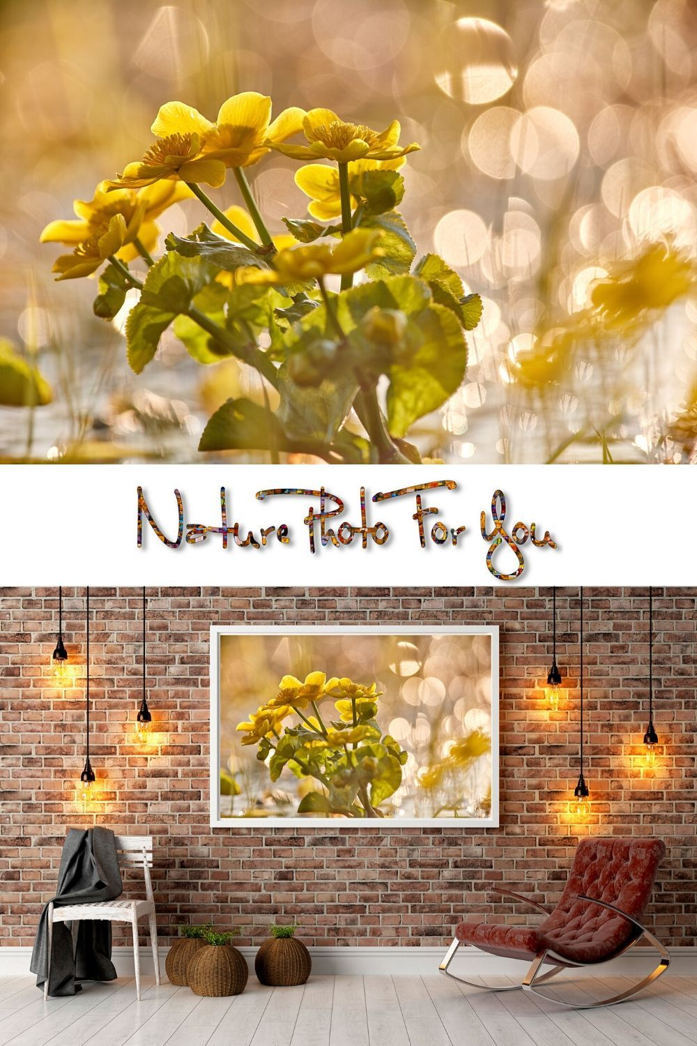 Yellow Wild Flower Photo Spring Theme Floral Theme Nature Theme Decor 1st Anniversary Gift Chiropractor Gift Gift For Mother Bbf Gift Flower Photos Photo Wall Art Spring Theme