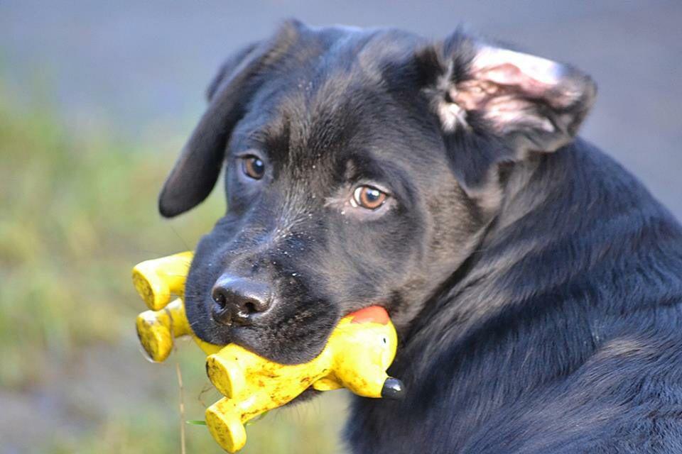 Sweet And Honey Hunde Welpen Rassehunde