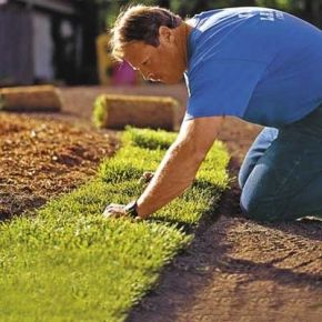 9 Steps To A Lush Lawn With Images Lush Lawn Lawn Care Lawn
