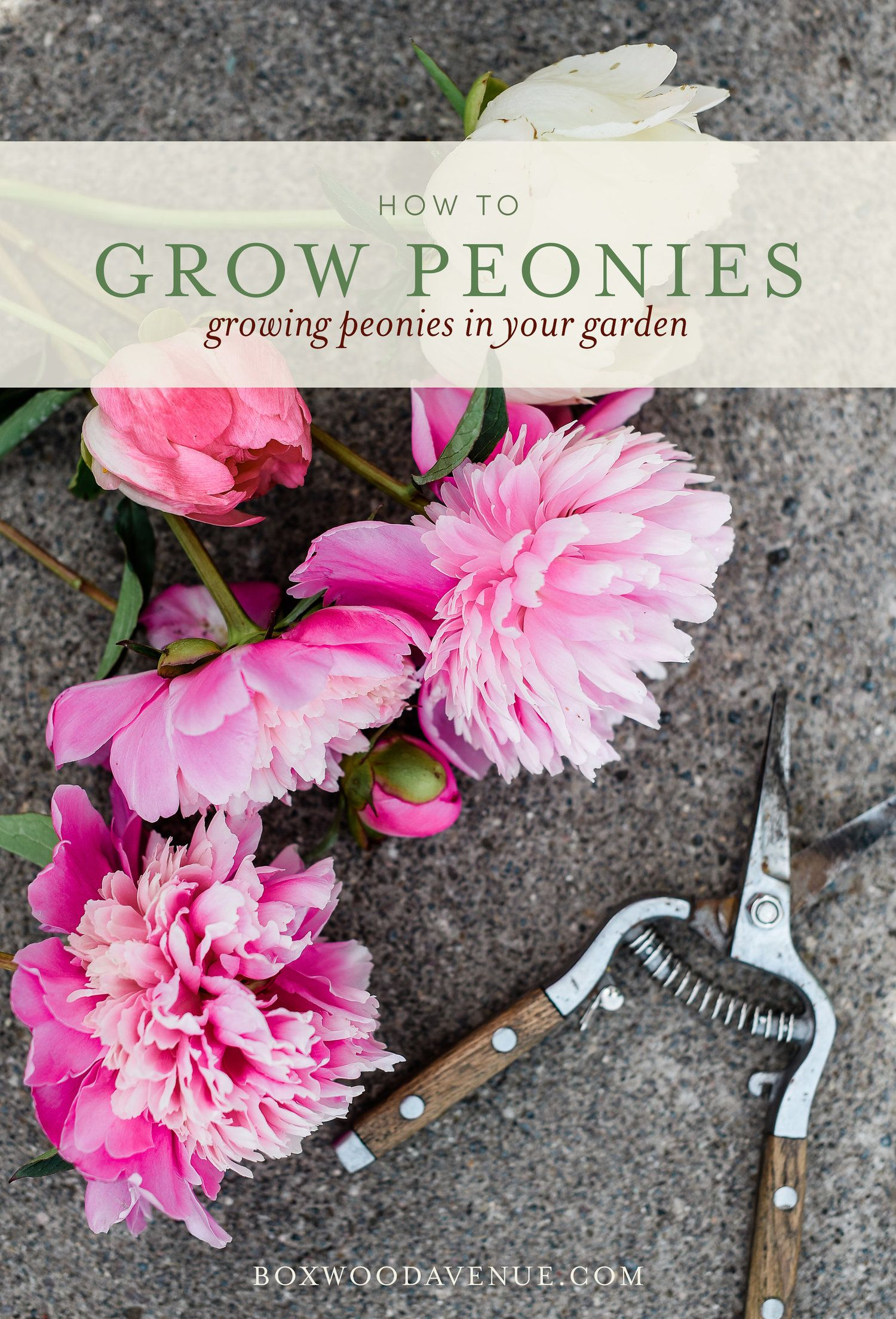 Pin On Gardens Bouquets