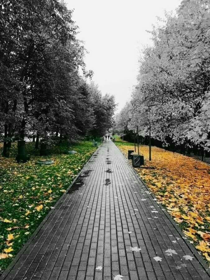 Color 2 pop of color colour splash colour photography fall halloween pumpkin paths white people black people