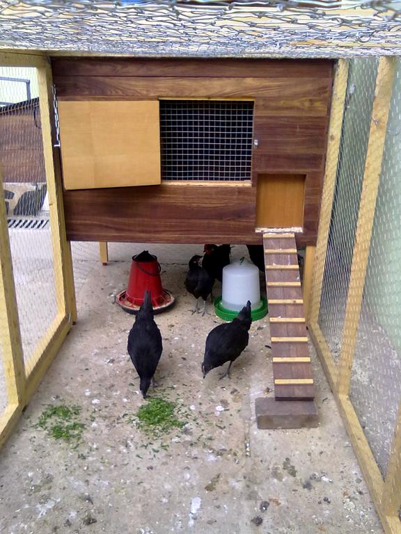 Gallinero construcci n imagen frontal patio con escalera gallineros pinterest gallineros - Casas para gallinas ...