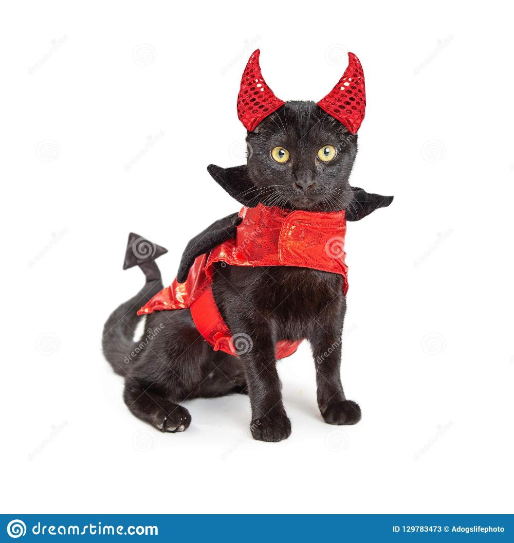 Pin On Cutesy Kitties