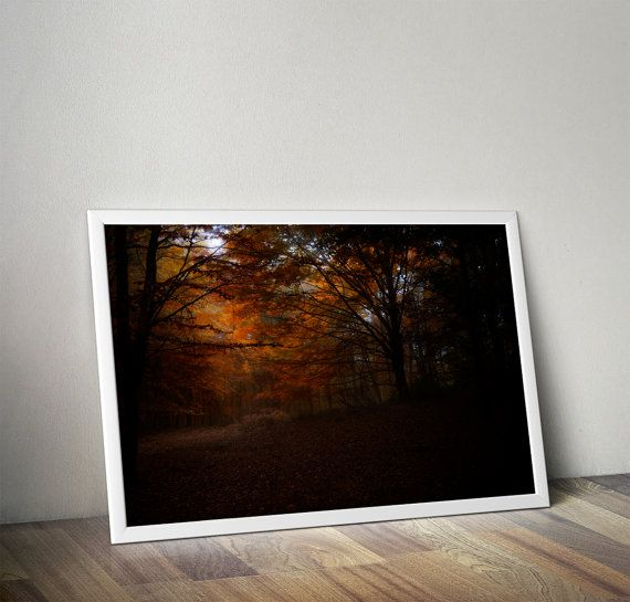 Fairy Forest. Printable high quality photography. 12MP