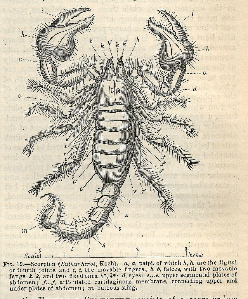 encyclopedia britannica a dictionary of arts and sciences