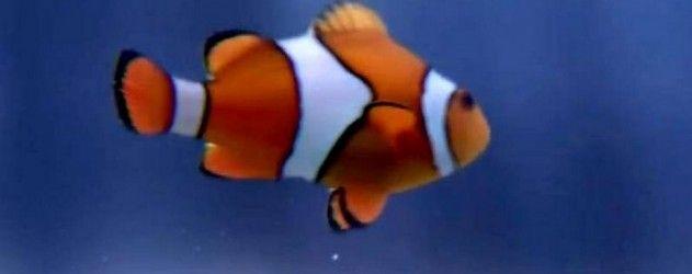 Avez-vous décelé des poissons d'avril ? Récap des plus belles prises du Cerveau pour le 1er avril 2015