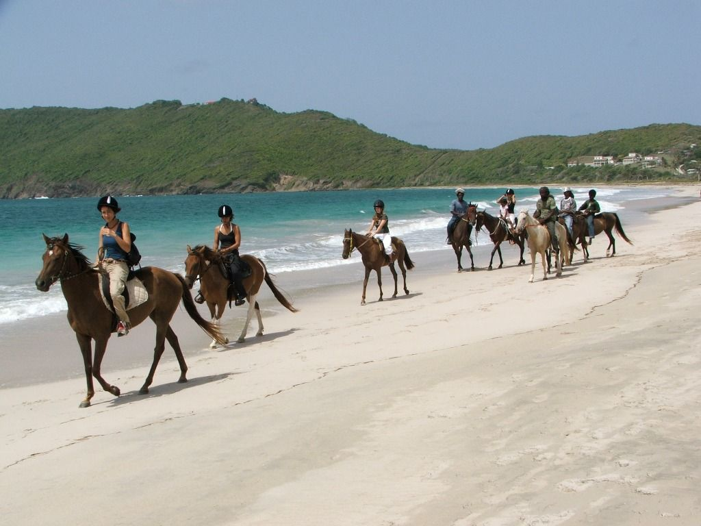 Did This Last Year Was Great The Guys Were Wonderful And Very Safety Oriented Horse Riding On Beach In St Lucia Top 10 Things To Do