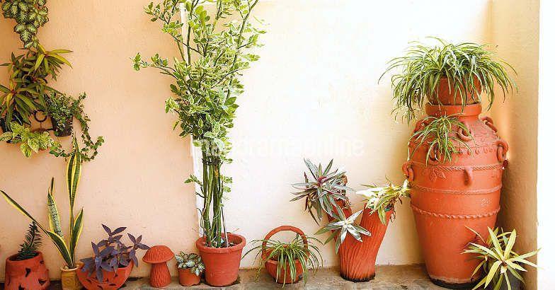 Home Garden Ideas For The House Pinterest Garden Balcony