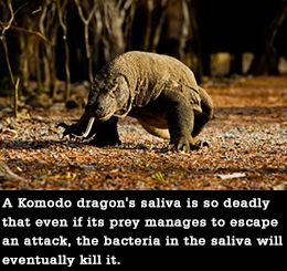 Facts About the Komodo Dragon That Kids Would Enjoy Reading ...