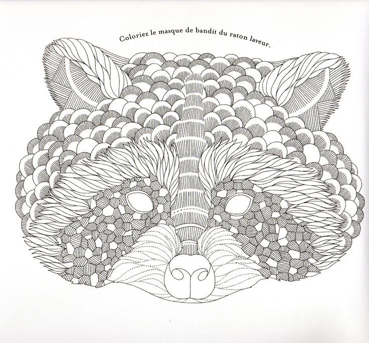 Cartoon Raccoon Coloring Pages , Transparent Cartoon, Free ... | 684x736