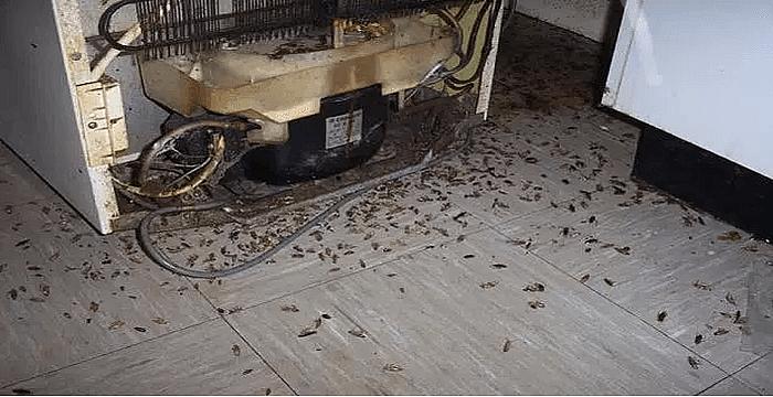 Esta Es Una Manera Efectiva Para Destruir Todas Las Cucarachas En Su Casa Matar Cucarachas Cucarachas Eliminar Cucarachas Pequeñas