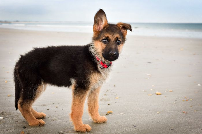 Cute puppies on Yummypets.com ... Discover them !! #pup #animal #pet #puppy #dog #chien