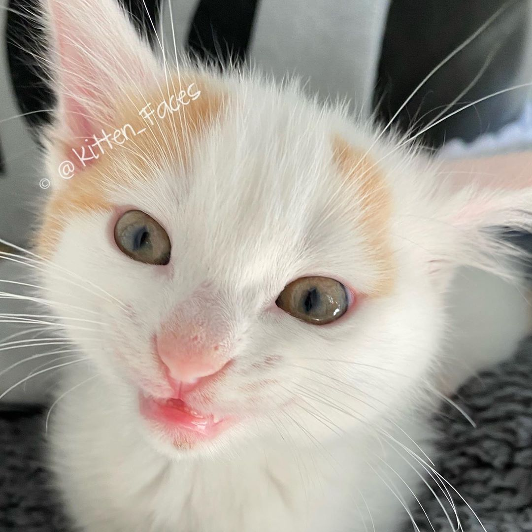Pretty Little Girl With Pink On Her Nose Tiny Pink Lips And Pink Little Toes Sweet Baby Kitten Funny As Can Be In 2020 Baby Kittens Little Kittens Small Kittens