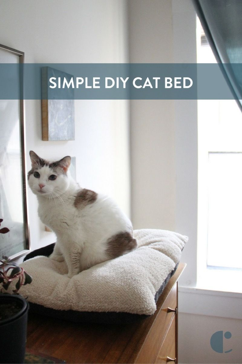 Window bed for cats  how to purrfectly simple diy cat bed  dogs like pinterest diyus