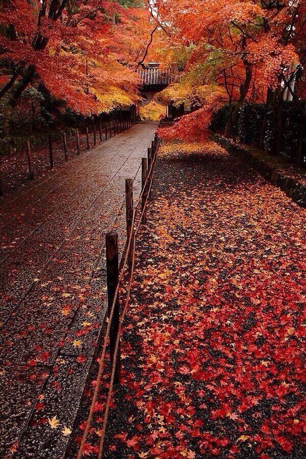 Kyoto, Japón. pic.twitter.com/uPkhXXDvea