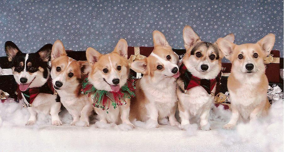 Google Image Result For Http 1 Bp Blogspot Com Sm20dvbmdew S9g2h3z22ai Aaaaa Corgi Cute Corgi Corgi Christmas