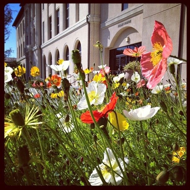 Gotta love the #flowers outside of Alumni Science!