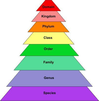 scientific paper writing guide