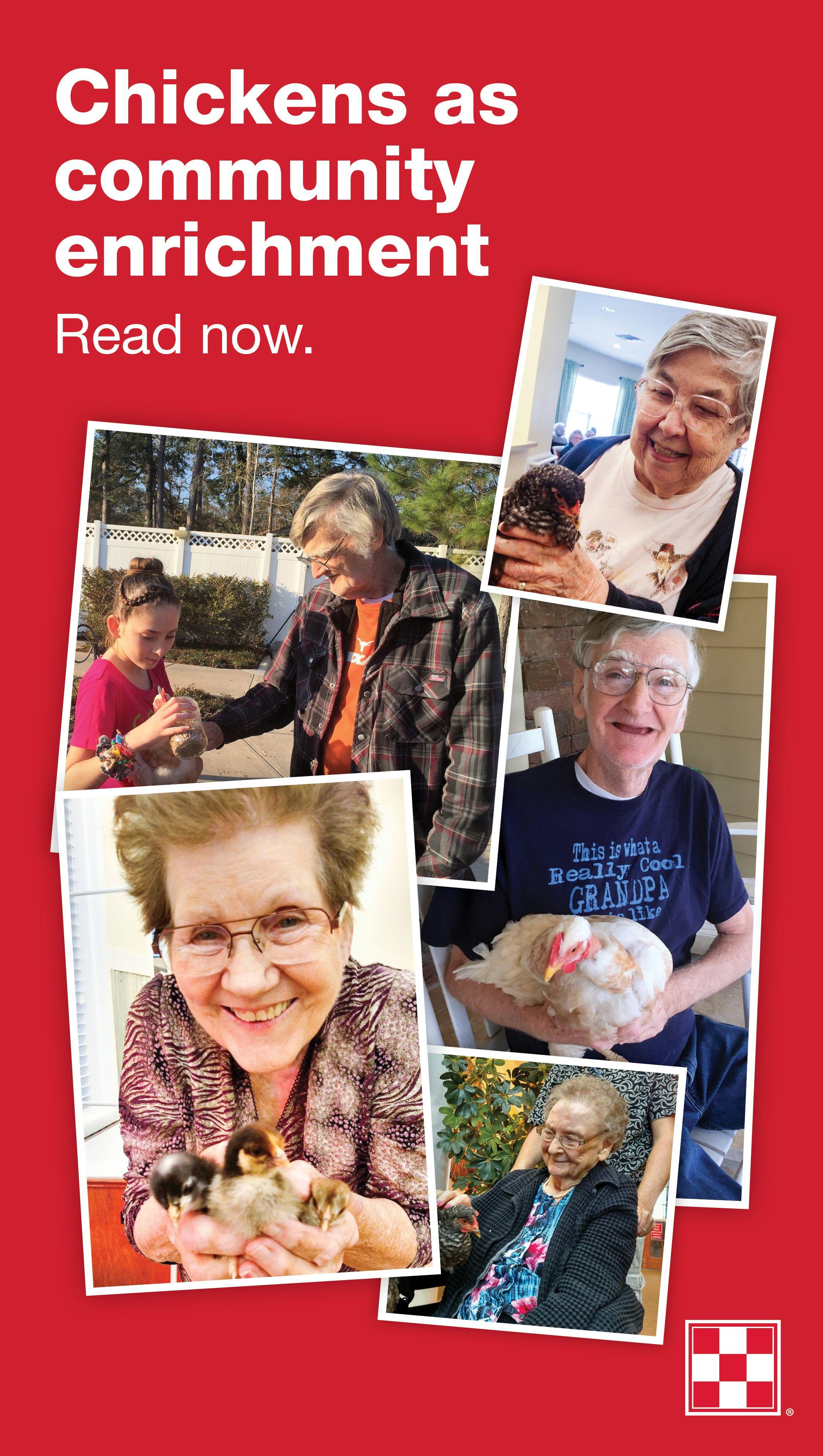 backyard chickens are perfect for senior community enrichment