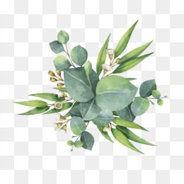 Flower Png Images Download 160000 Flower Png Resources With Transparent Background Watercolor Flowers Watercolor Flowers Paintings Leaf Flowers