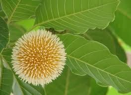 Natural Beauty Of Bangladesh Google Search Natural Beauty Nature Plant Leaves