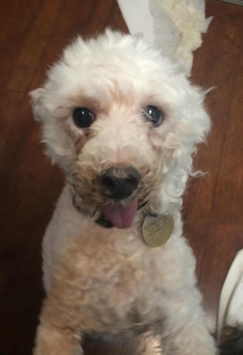 Adopt Jemma On Animal Rescue Pet Adoption Pets