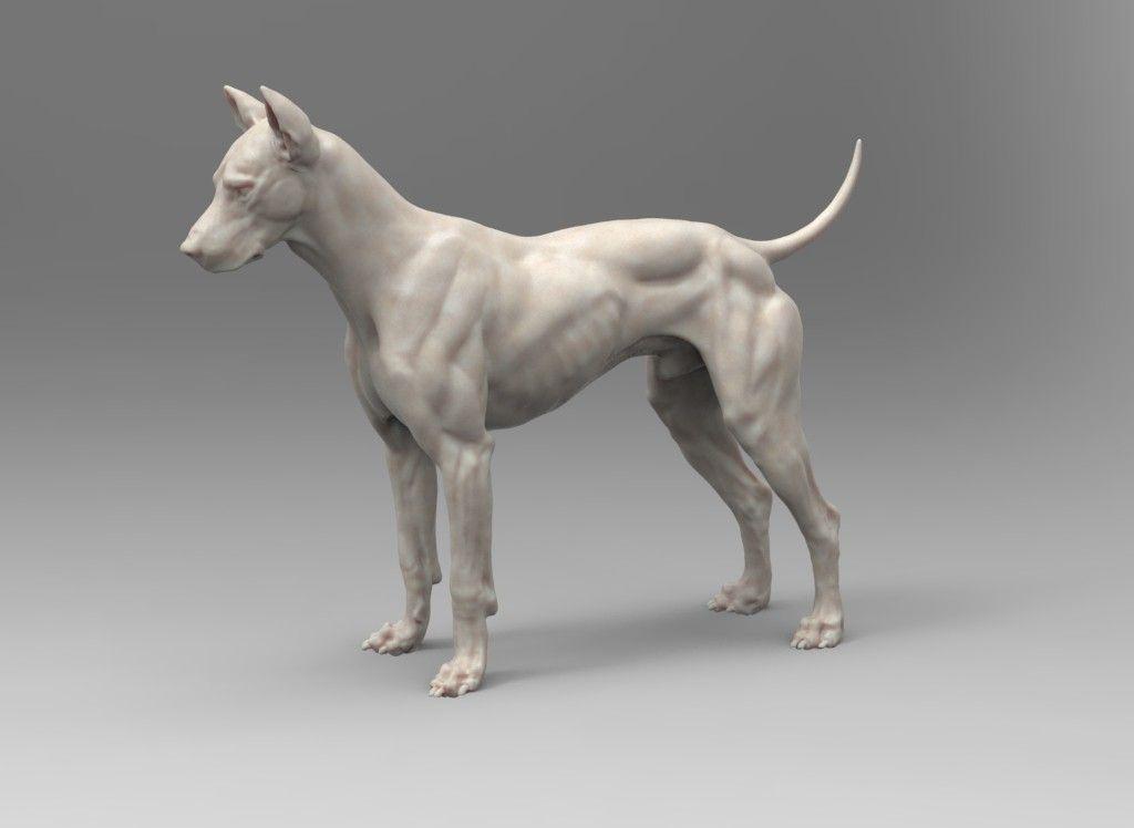 Canine Digital Model, steve lord on ArtStation at https://www ...
