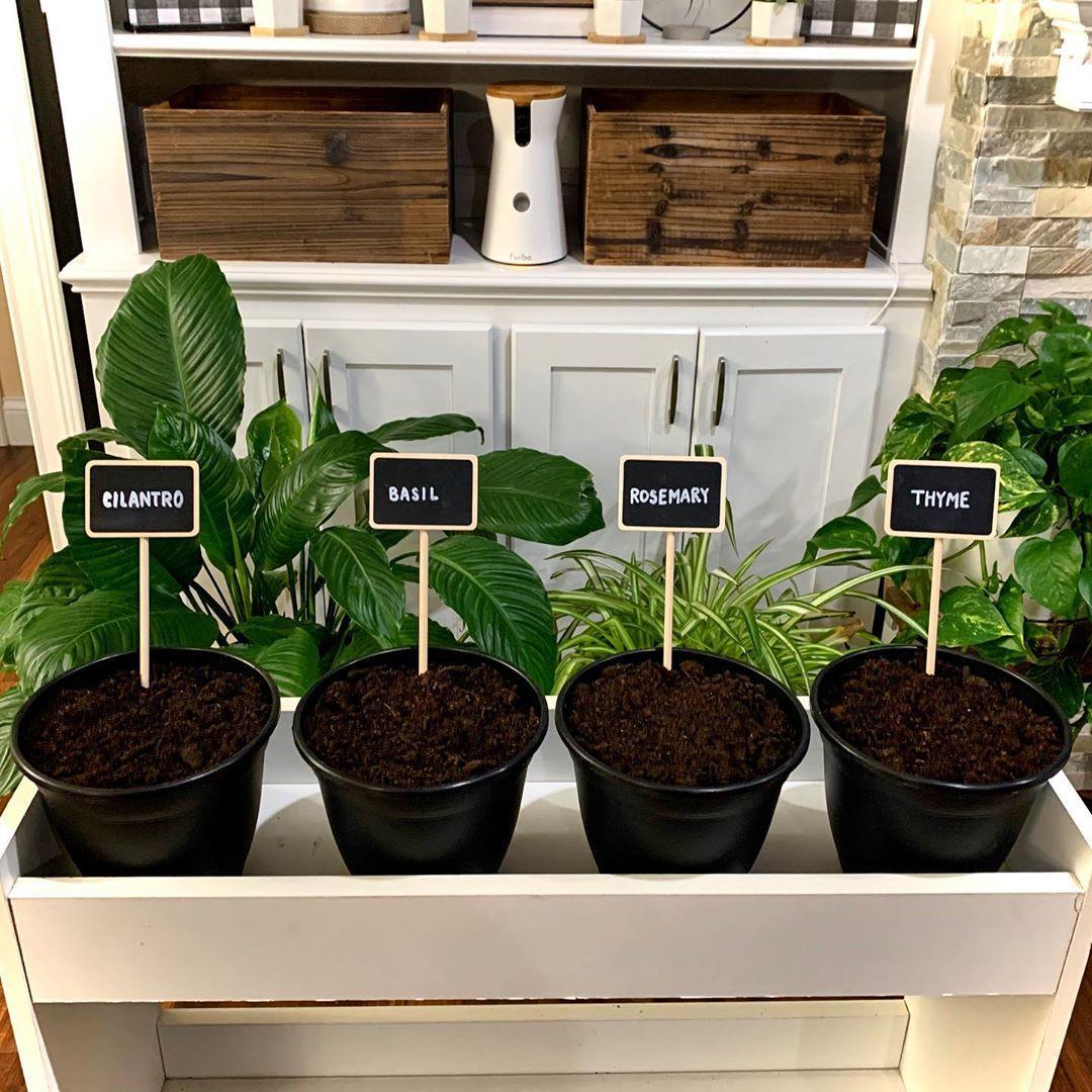 indoor herb gardens on instagram for the kitchen well on indoor herb garden diy wall kitchens id=25454