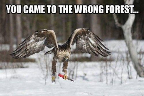 Le Meme Bird Eagles Eagle