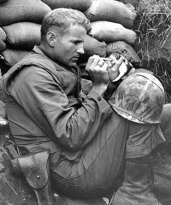 Il Sergente Frank Praytor si prende cura di un gattino di due settimane durante l'apice della Guerra in Korea.