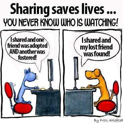for you who love animals :) share!