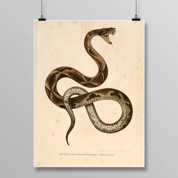 Reptile print Vintage Snake art  viper snake snake wall decor | Etsy