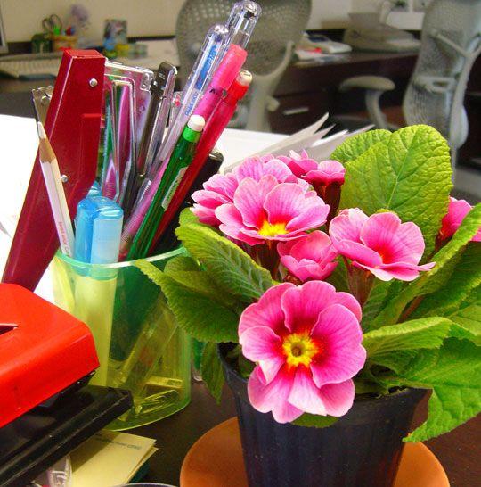 Mejores plantas para decorar tu escritorio en la oficina for Plantas decorativas para oficina