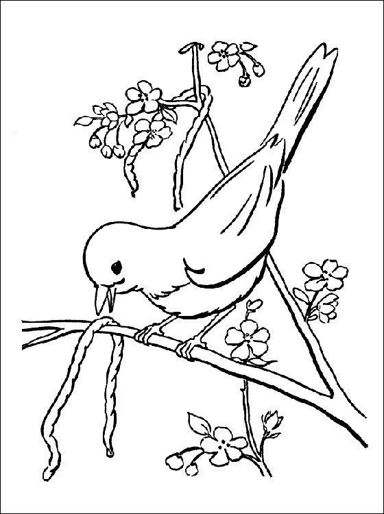 Coloriage Oiseau Sur Arbre.Coloriage De Printemps L Oiseau Sur L Arbre A Imprimer Coloriage A